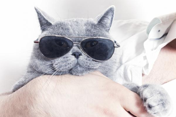 """RT @richardtubb: Cool Cats who run companies: Support creativity, innovation and <a href=""""https://twitter.com/search/%23opendata"""" target=""""_blank"""">#opendata</a>. Sponsor <a href=""""https://twitter.com/search/%23GovHack"""" target=""""_blank"""">#GovHack</a>  ⏩<a target=""""_blank"""" href=""""http://t.co/2dGwNrGkqY"""">http://t.co/2dGwNrGkqY</a>"""