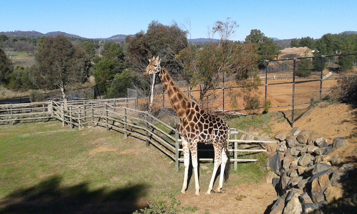 """Fun day at the National Zoo <a href=""""https://twitter.com/search/%23cbr"""" target=""""_blank"""">#cbr</a> <a href=""""https://twitter.com/search/%23visitcanberra"""" target=""""_blank"""">#visitcanberra</a> <a target=""""_blank"""" href=""""https://t.co/I9WZYy9FHN"""">https://t.co/I9WZYy9FHN</a>"""