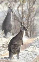 "<a href=""https://twitter.com/search/%23winter"" target=""_blank"">#winter</a> in <a href=""https://twitter.com/search/%23Canberra"" target=""_blank"">#Canberra</a> Frosty⛄❄ mornings <a href=""https://twitter.com/search/%23CBR"" target=""_blank"">#CBR</a> <a target=""_blank"" href=""https://t.co/7bd1ub4C0A"">https://t.co/7bd1ub4C0A</a>"
