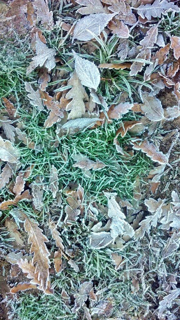 "Frosty morning in <a href=""https://twitter.com/search/%23Canberra"" target=""_blank"">#Canberra</a> <a href=""https://twitter.com/search/%23CBR"" target=""_blank"">#CBR</a> <a href=""https://twitter.com/search/%23winter"" target=""_blank"">#winter</a> <a target=""_blank"" href=""https://t.co/zfcW7fSfP0"">https://t.co/zfcW7fSfP0</a>"