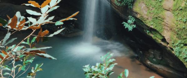 buderim forest waterfall photo
