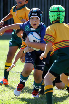 Primary-Rugby