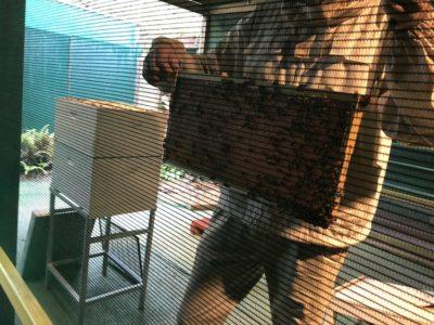 Honey World Img 7704
