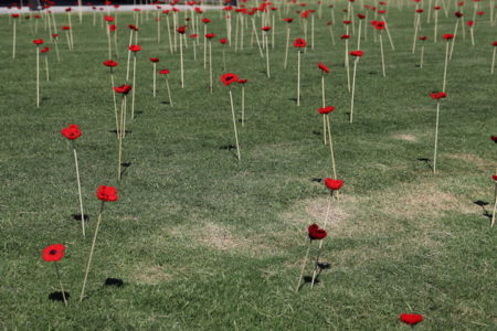 Poppies 2347