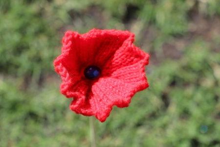 Poppies 2349