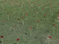 Poppies 2367