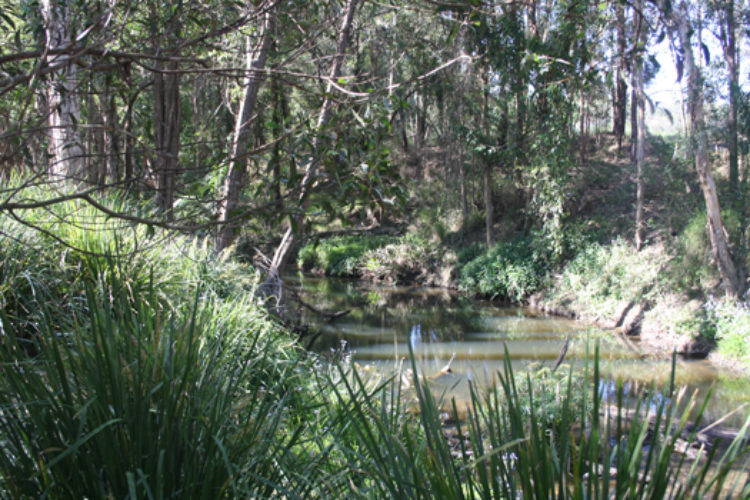 Year-8-Hillards-Creek-2015-40