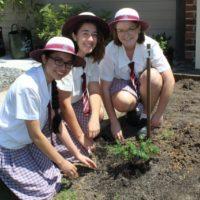 2016-Year-12-Tree-Planting-2
