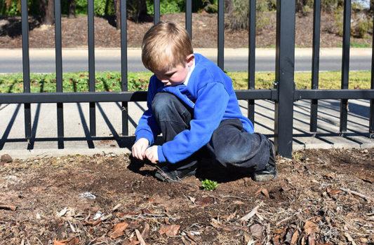 News Nat Tree Day 12