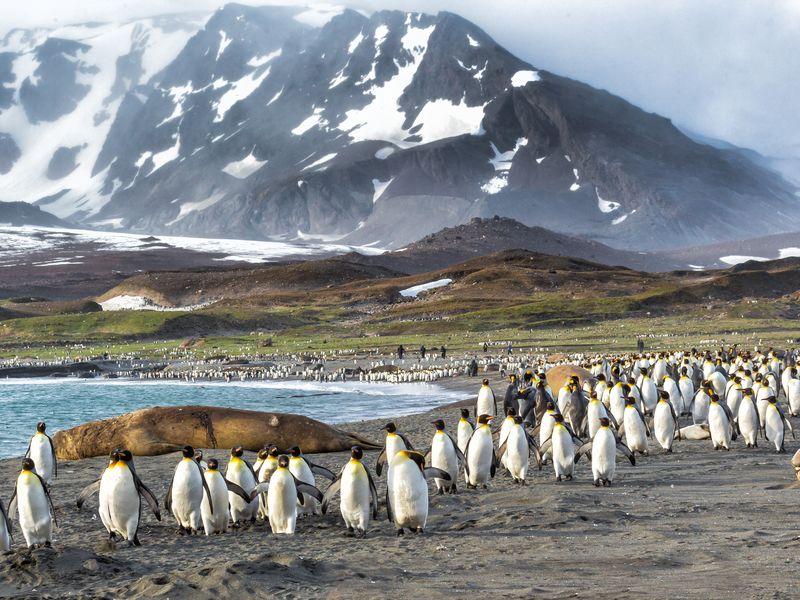 Antarctica, South Georgia & Falkland Islands