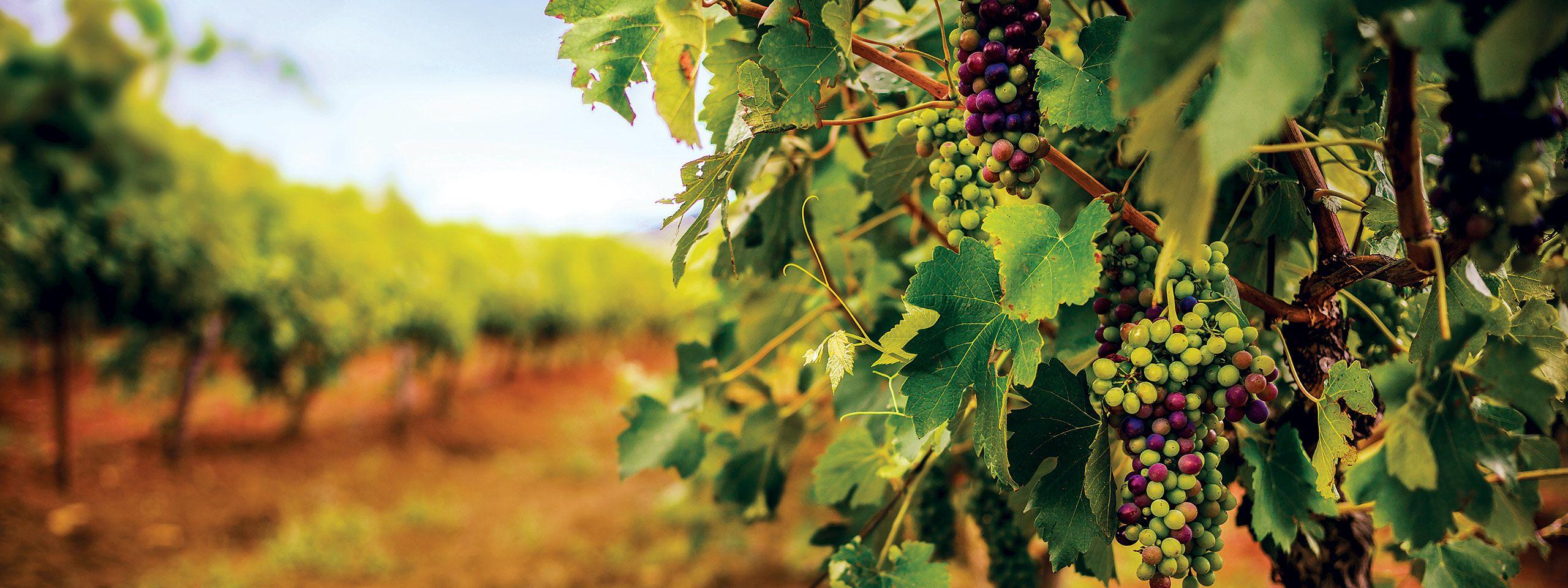 Sydney Food & Wine Discovery
