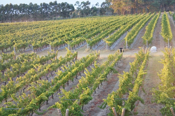 The Secret Southern Wineries