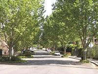 Williams Parade Street Trees