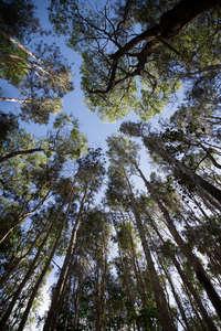 Doonan er forest  4.17 083