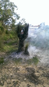 Grasstree on fire1