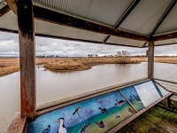 Mother of ducks lagoon nature reserve bird hide engage