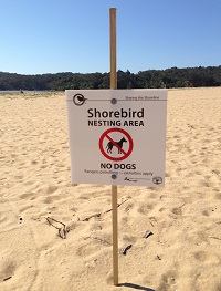 Amy harris shorebird sign200jpg