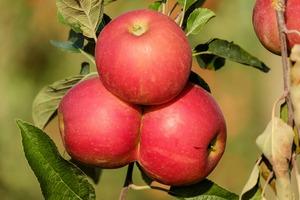 Apple 1666113 1920