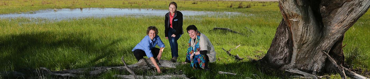 Murray wetlands