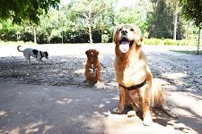 Dog newsitem