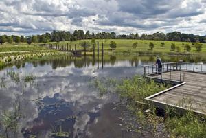 2011_sydney_park_wetlands