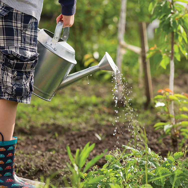 Person watering garden with watering can