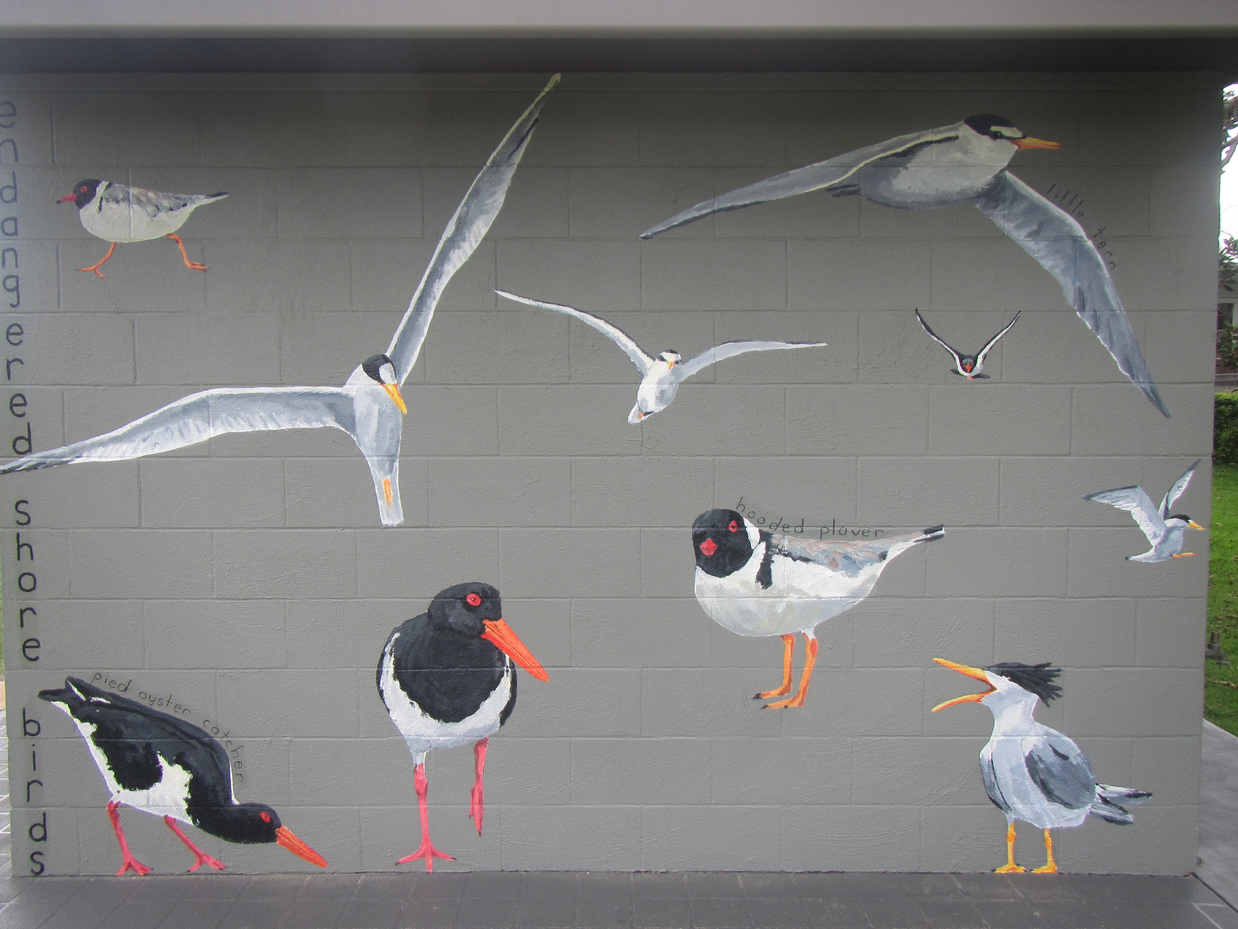 Simon tedder img 4779 bird mural wall painting 2016