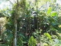 Lowland rainforest inner pocket nature reserve resized