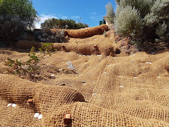 Swanbourne dunes restoration project