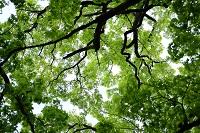 Tree dcp newsitem
