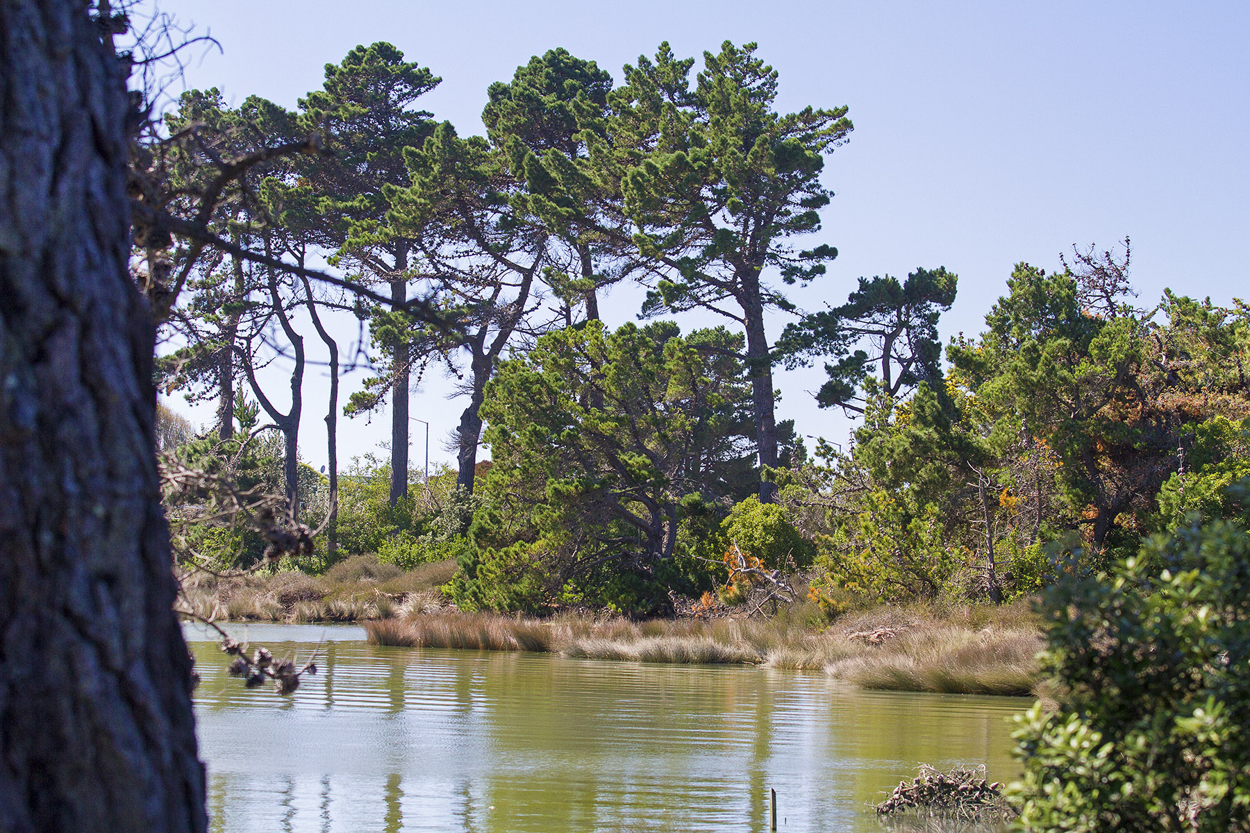 Snb wetland
