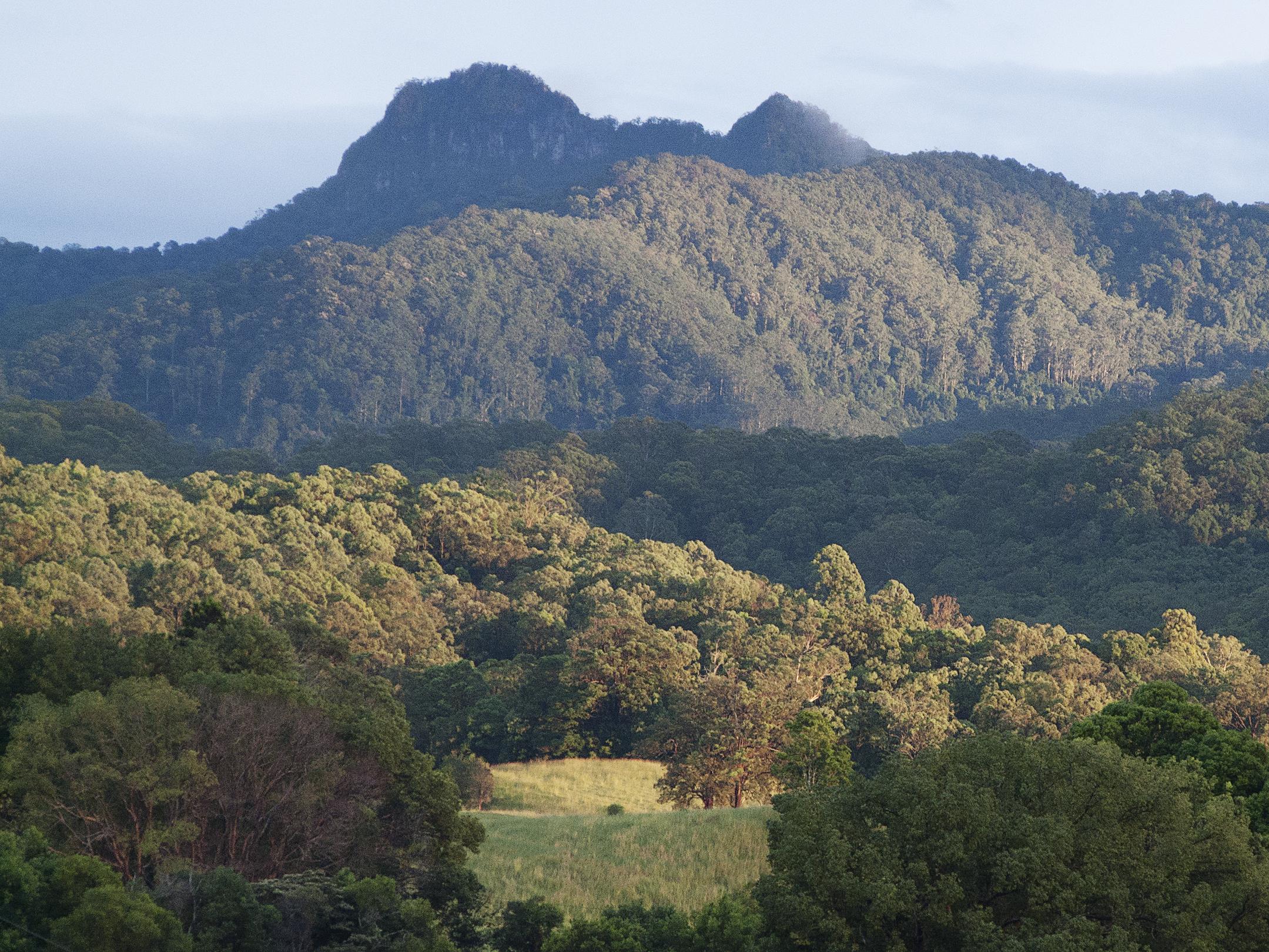 Old Frangela Reserve