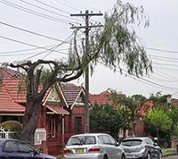 Tree_trimming