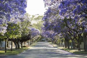 Street tree survey image compressed