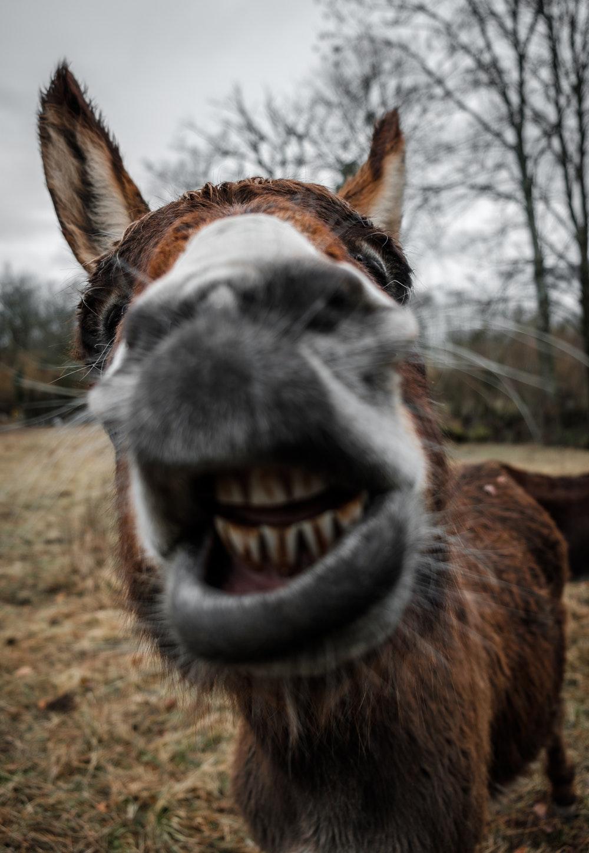 Dave's donkey