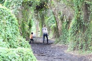 Secret garden low res