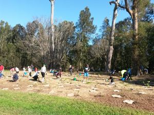 Threatened_species_koala_tree_planting_day_trees_sep_2015_-_planting_trees