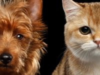 Domestic animal plan   participate   past projects