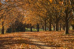 Moulder park autumn