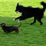 Thumbnail dog park3