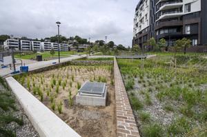 dsc2903 harold park open space works