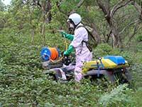 Blackberry spraying weeds 101098 engage