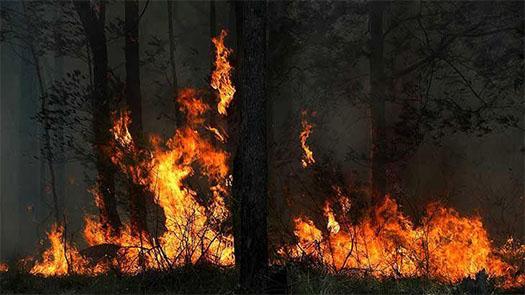 Bushfire image intranet 11112019