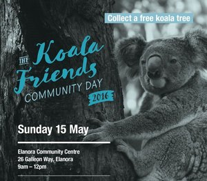 Koala_friends_community_day_2016_cropped