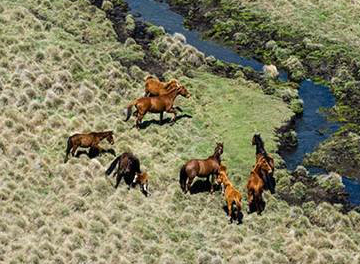 Images and videos of horses in Kosciuszko National Park