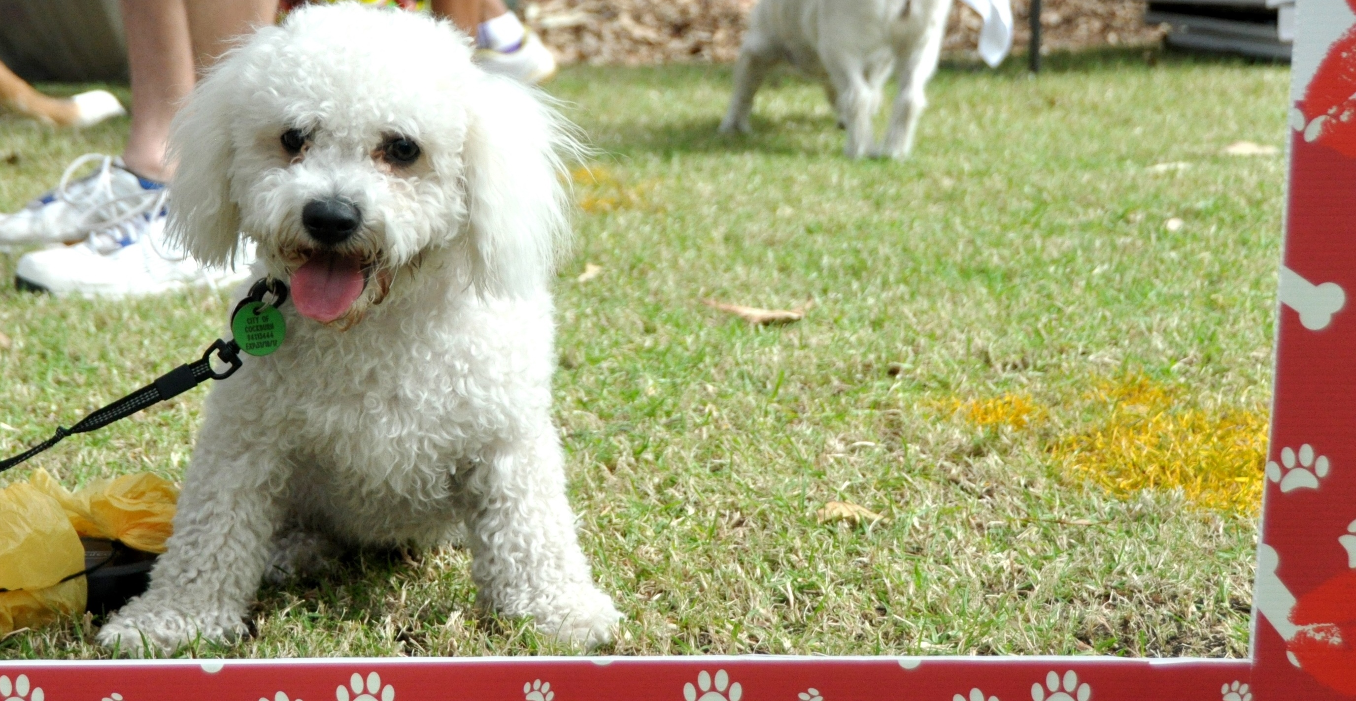 Coogee Dog Friendly Parks