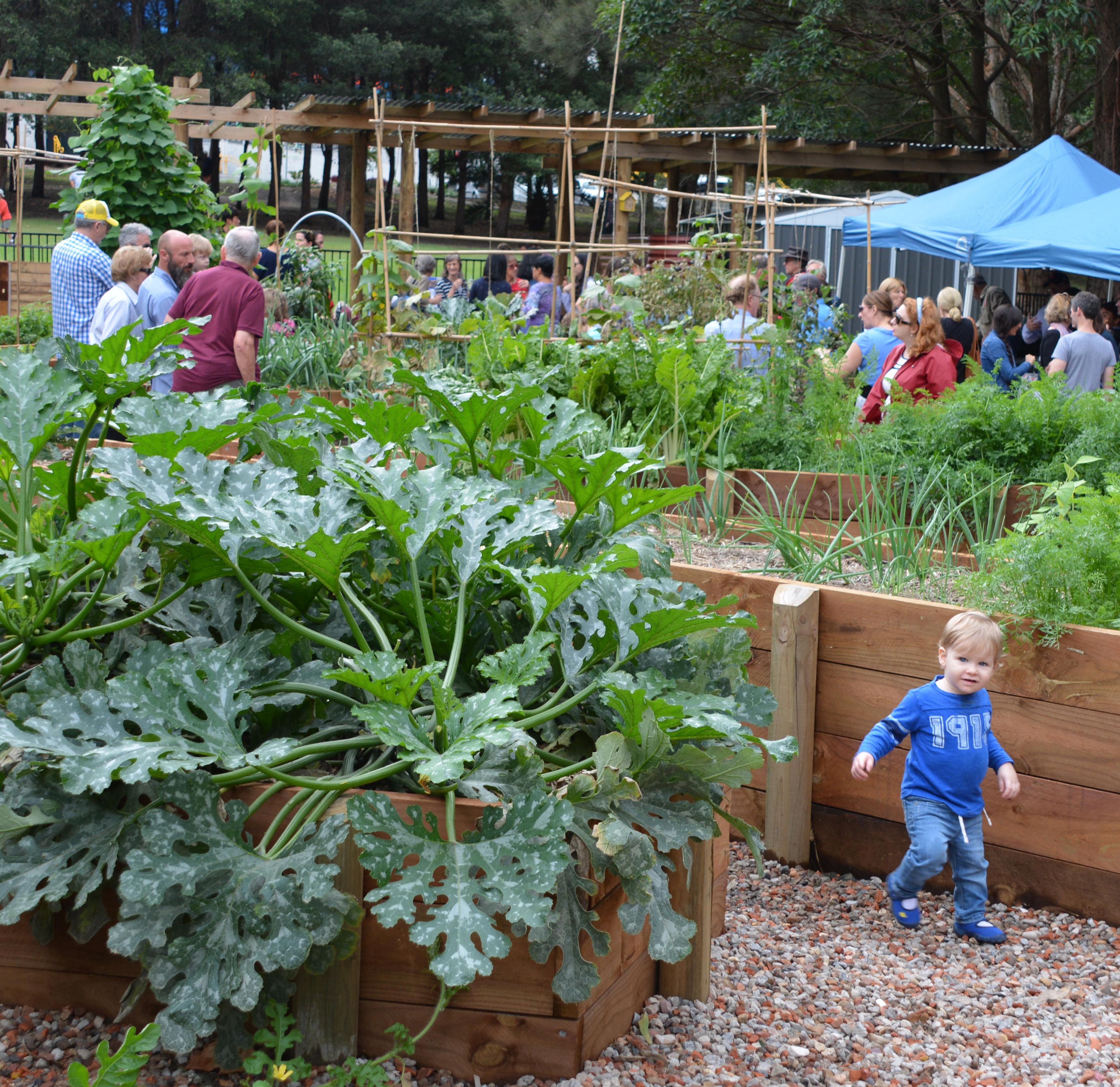 Anzac park community garden