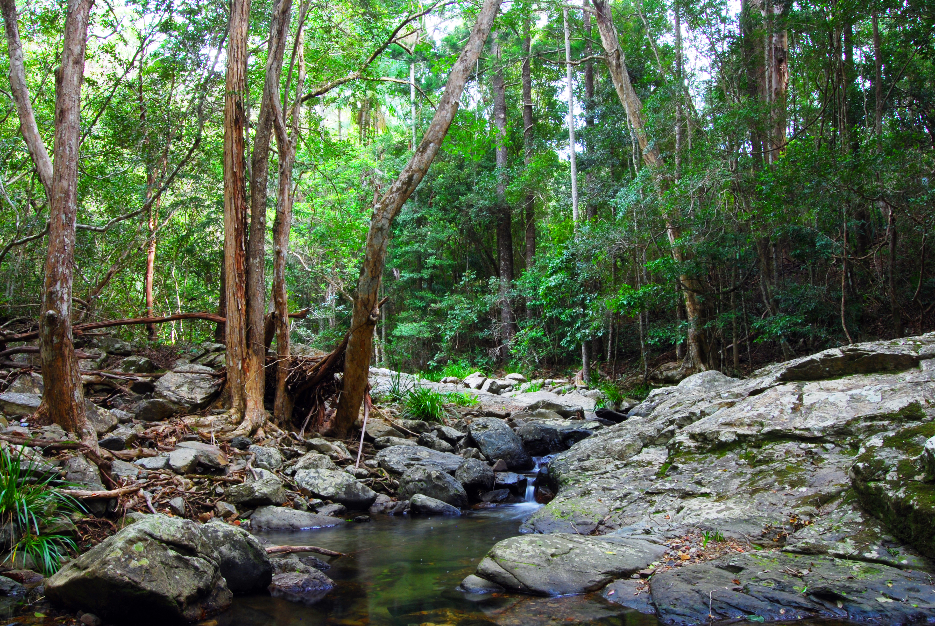 About gold coast natural areas