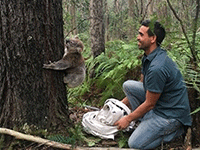 Pas-koala-kangaloon-200