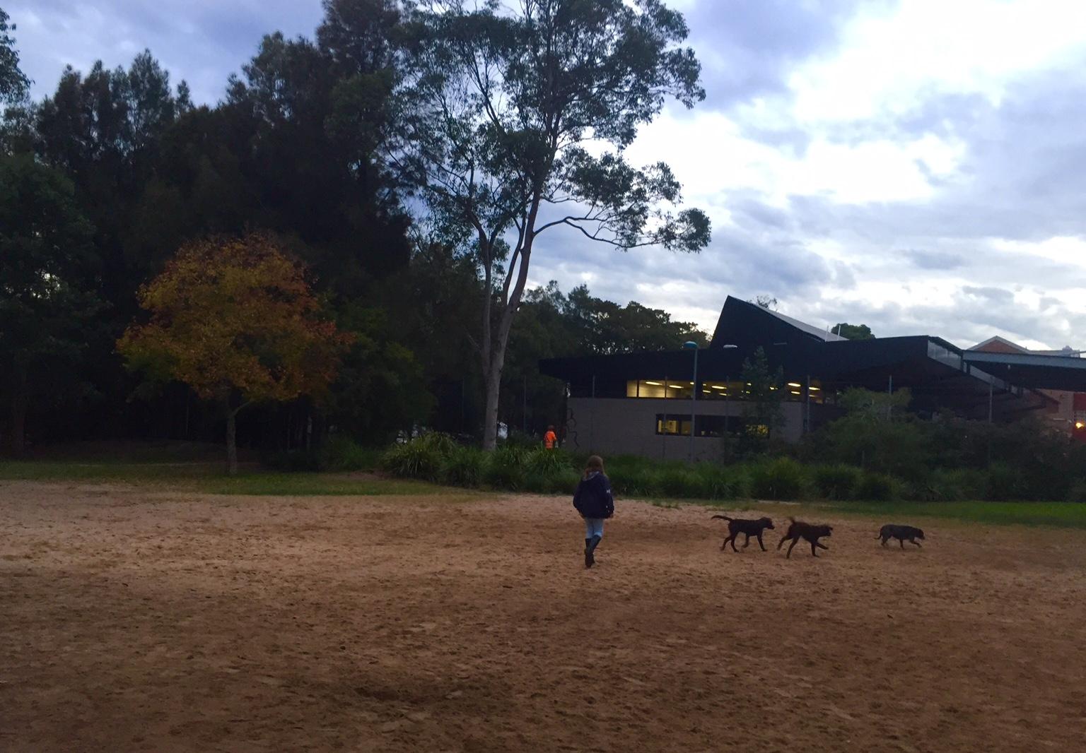Enmore tafe dog park